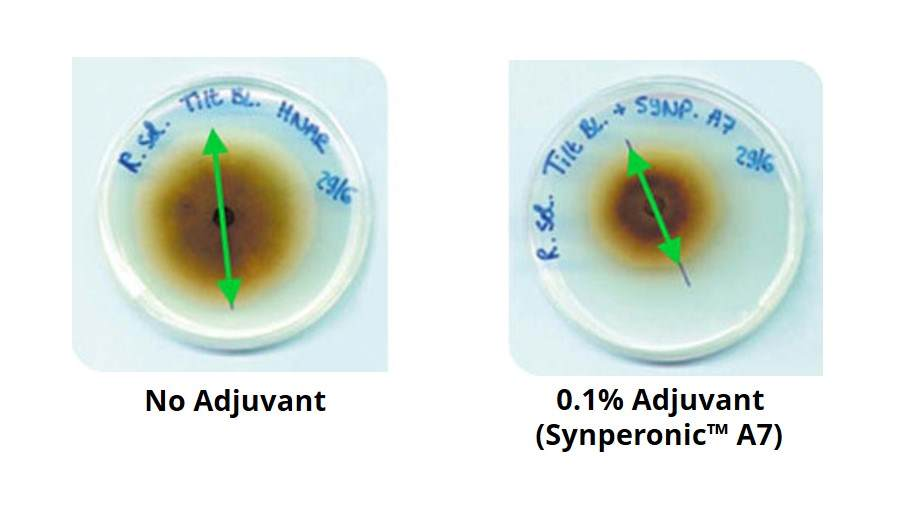 Synperonic A7 showing improved fungicide performance